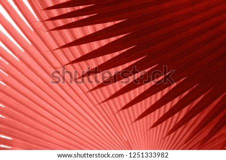 Beautiful tropical leaves texture in colour of the year 2019 Pantone - Living Coral #1251333982