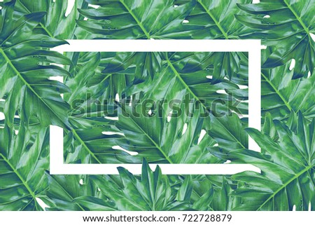 Beautiful tropical leaves with  white paper frame, natural concept. #722728879