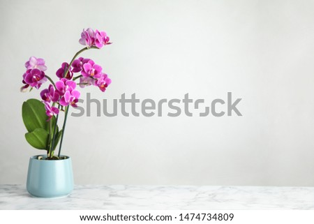 Beautiful tropical orchid flower in pot on marble table against light background. Space for text Сток-фото ©