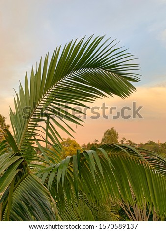 Beautiful tropical palm fronds with sunset sky in background, Queensland, Australia #1570589137