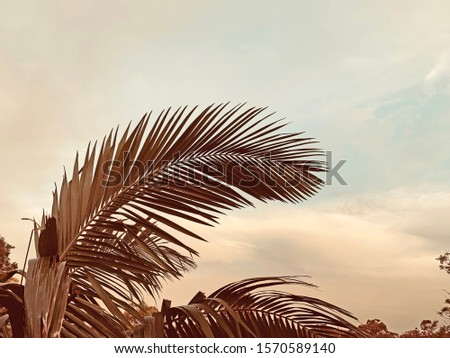 Beautiful tropical palm fronds with sunset sky in background, Queensland, Australia #1570589140