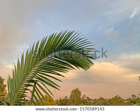Beautiful tropical palm fronds with sunset sky in background, Queensland, Australia #1570589143