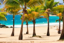 Beautiful tropical palm trees at popular touristic Condado beach in San Juan, Puerto Rico