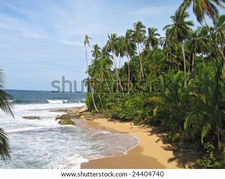 beautiful tropical plam covered beach