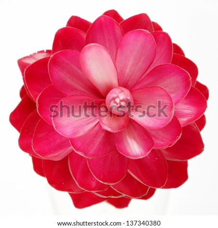 beautiful tropical red ginger flower on isolate white background.