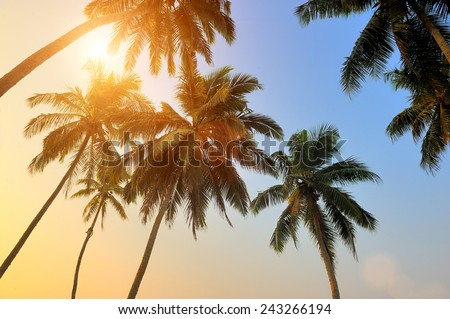 Beautiful tropical sunset with palm trees at beach
