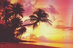 Beautiful tropical sunset with palm trees silhouette at beach, retro stylized