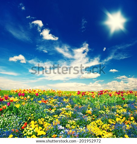 beautiful tulip flowers field and cloudy blue sky. nature landscape. retro style toned picture