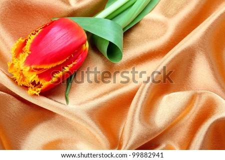 beautiful tulip in cream satin