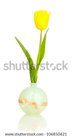 Beautiful tulip in vase isolated on white