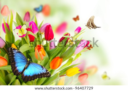 Beautiful tulips bouquet with butterflies