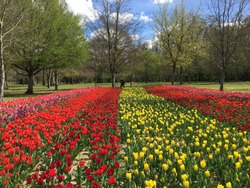 Beautiful tulips garden in spring at Chateau de Cheverny