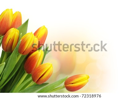 Beautiful tulips with copy space