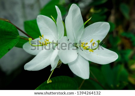 Beautiful Twins white Flower with Green Leaves, Picture of flowers,  Flowers image, Photos with flowers
