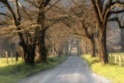 Beautiful un-paved country road lined with large trees at sunrise with low fog.