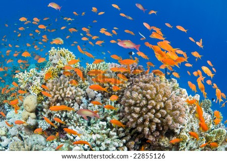 Beautiful Underwater Scenes