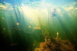Beautiful Underwater view of a pond in summer