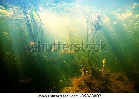 Beautiful underwater view of a pond in summer stock photo