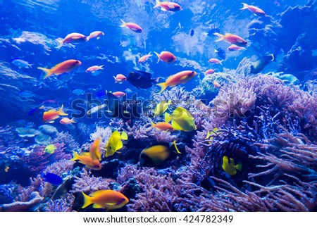 beautiful underwater world #424782349