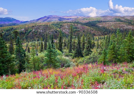 Beautiful Valley in Summer in Denali National Park, Alaska