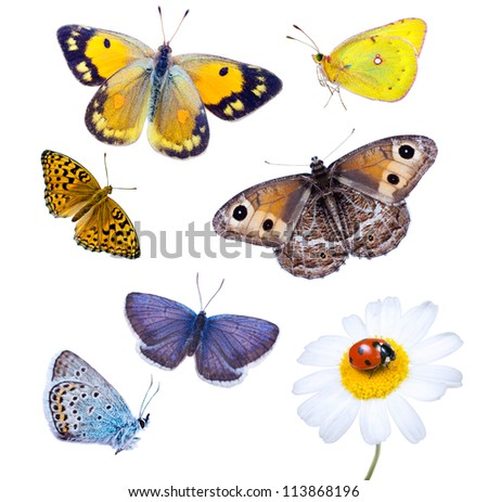 Beautiful varicoloured butterflies are isolated on a white background