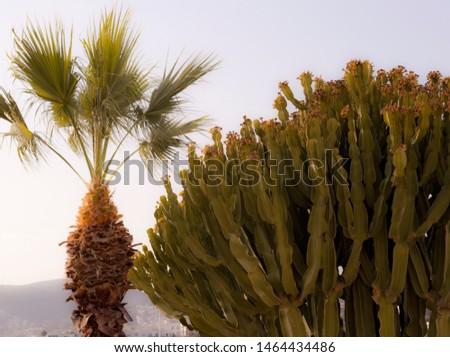 Beautiful variety of cactus species, with blue sky in the background. Turkey, Bodrum summer flowers. Aegean plant varieties.