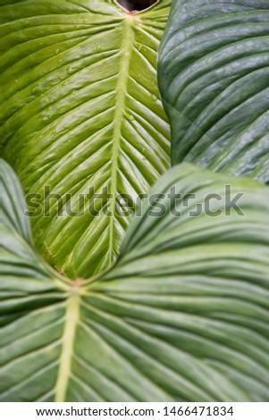 Beautiful vegetation detail in the rainforest, Serrinha, Rio de Janeiro, Brazil