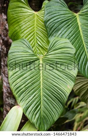 Beautiful vegetation detail in the rainforest, Serrinha, Rio de Janeiro, Brazil #1466471843