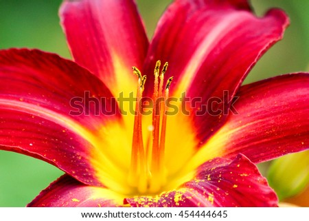 Free photos beautiful vibrant exotic red flower with yellow centre beautiful vibrant exotic red flower with yellow centre 454444645 mightylinksfo