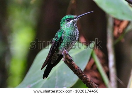 Beautiful Vibrant Hummingbird #1028174458