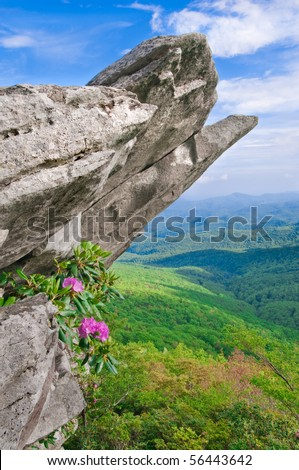 Beautiful view from the Blue Ridge Parkway showing the native Catawba Rhododendron in full bloom on a rocky outcropping.