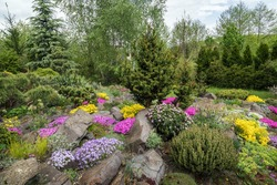 Beautiful view in rock garden. Landscape design with colorful flowers and dwarf conifers.