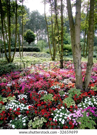 Beautiful view of a carpet of colored flowers under trees in a park