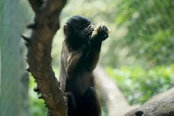 Beautiful view of a monkey at the zoo of Cali, Colombia