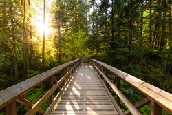 Beautiful View of a Wooden Bridge in a Green Rain Forest during a sunny sunset. Taken in Kanaka Creek, Maple Ridge, near Vancouver, British Columbia, Canada.