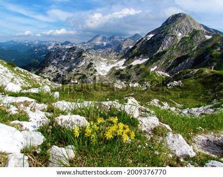 Beautiful view of an alpine landscape in Julian alps and Triglav national park, Slovenia with mountains Bogatin and Zadnji Vogel and yellow common kidney vetch (Anthyllis vulneraria) flowers Stockfoto ©