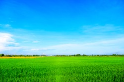 Beautiful view of blue sky with meadow green rice agriculture landscape use for wallpaper and backdrop