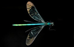 beautiful view of dragonflies on a black background