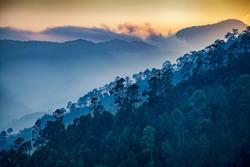Beautiful view of Foggy pine forest and sunrise at himalaya range, Almora, Ranikhet, Uttarakhand, India.