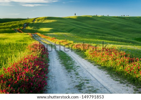 Beautiful view of green fields and meadows at sunset in Tuscany