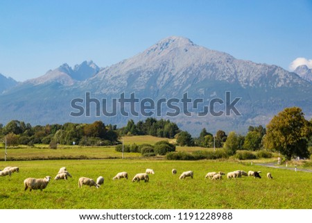 Beautiful view of High Tatras (Vysoke Tatry) mountains, and flock of sheep grazing in a green meadow, Slovakia Stockfoto ©