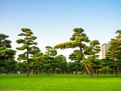 Beautiful view of japanesse trees in Hibiya park in Tokyo, Japan