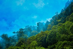 Beautiful view of misty forest that located in Wonogiri, Central Java, Indonesia