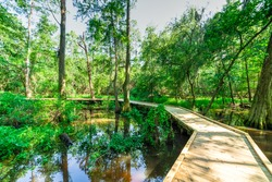 Beautiful view of nature trail boardwalk with bald cypress trees