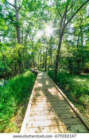 Beautiful view of nature trail boardwalk with bald cypress trees growing at Jesse H. Jones Park & Nature Center in Humble, Texas, US. Outdoor recreational activities, travel concept. Forest background