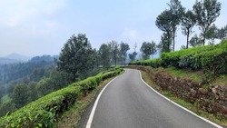 beautiful view of road with green tea plantation over hill mountain with blue sky background rainy mist fog