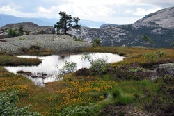 Beautiful view of small pond in the mountains above village Vrådal, Telemark, Norway.  Summer day with clouds, Colorful flowers and heather. Horizontal shot.