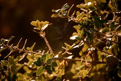 beautiful view of spider web with small spider in the branches of tree with green leaves.