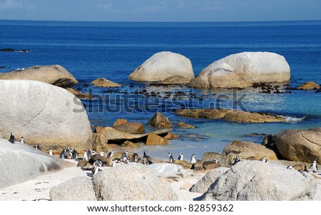 Beautiful view of the beach of Atlantic Ocean(South Africa)with african penguins