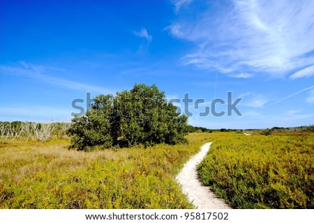 Beautiful view of the Everglades coastal prairies with buttonwood, marl, and Saltwort - stock photo